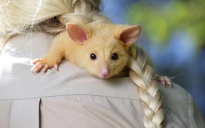 Интересные фотографии с животными