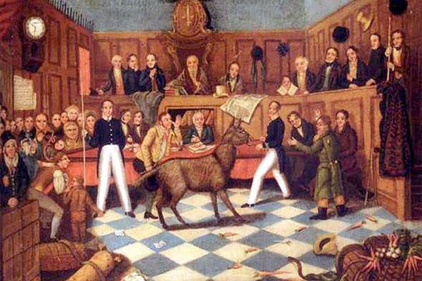 10 случаев, когда животные привлекались к суду