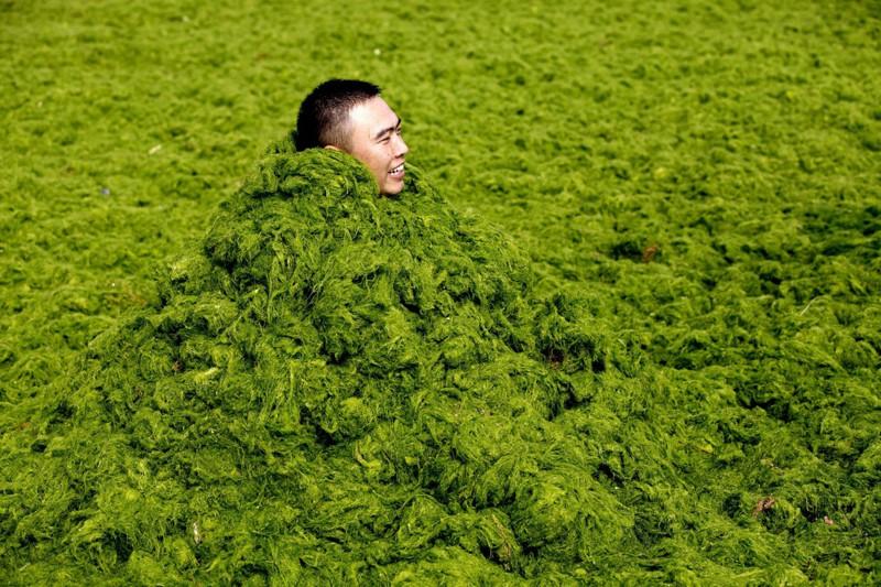 Зеленые водоросли атакуют Китай
