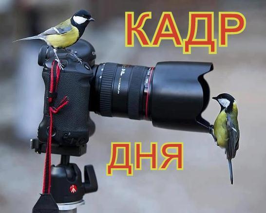 Кадр дня: Пощипали!))