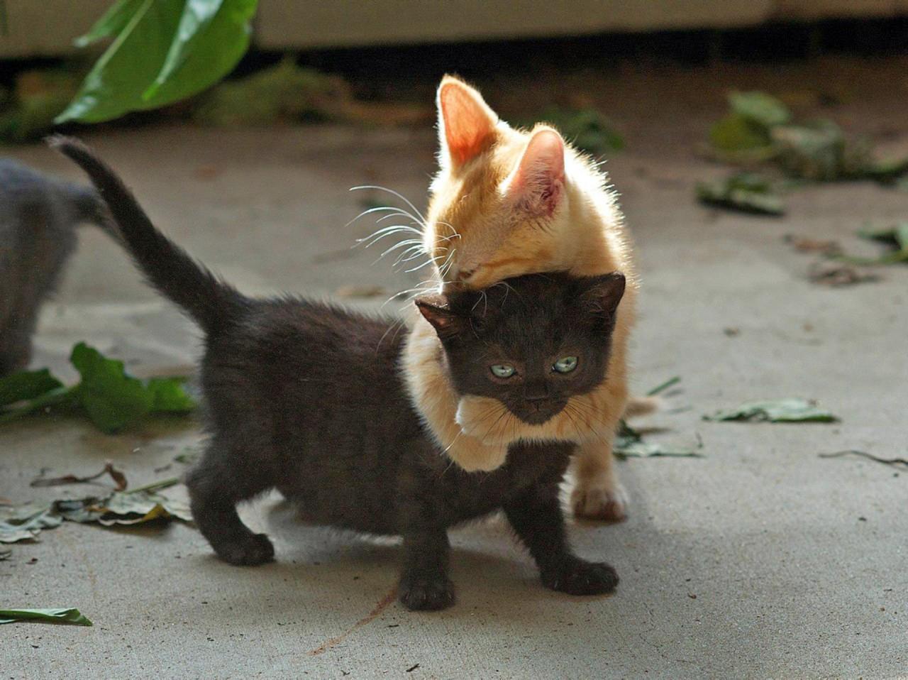 Дайте, я вас обниму