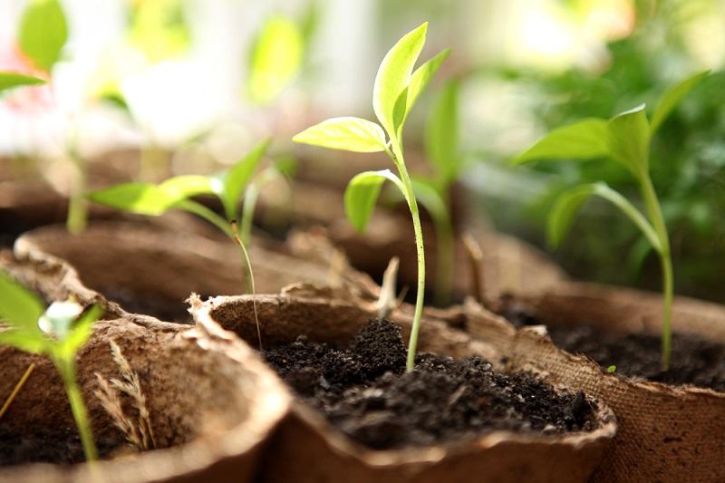 что дает йод для растений