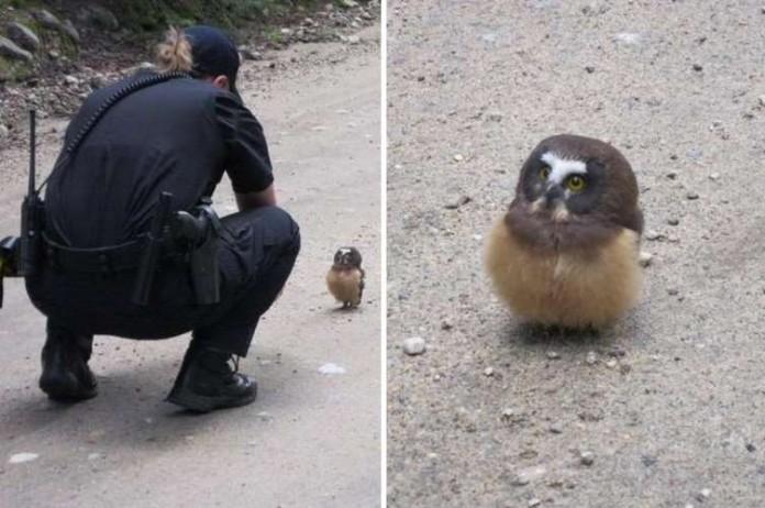 Совёнок и полицейский: Трогательная встреча с невозмутимым птенцом