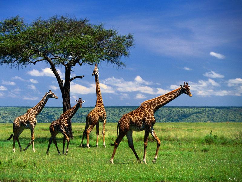Самые-самые! Интересные факты о животных.