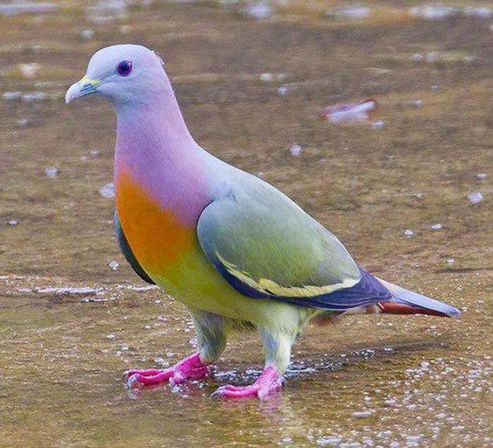 Краски животного мира
