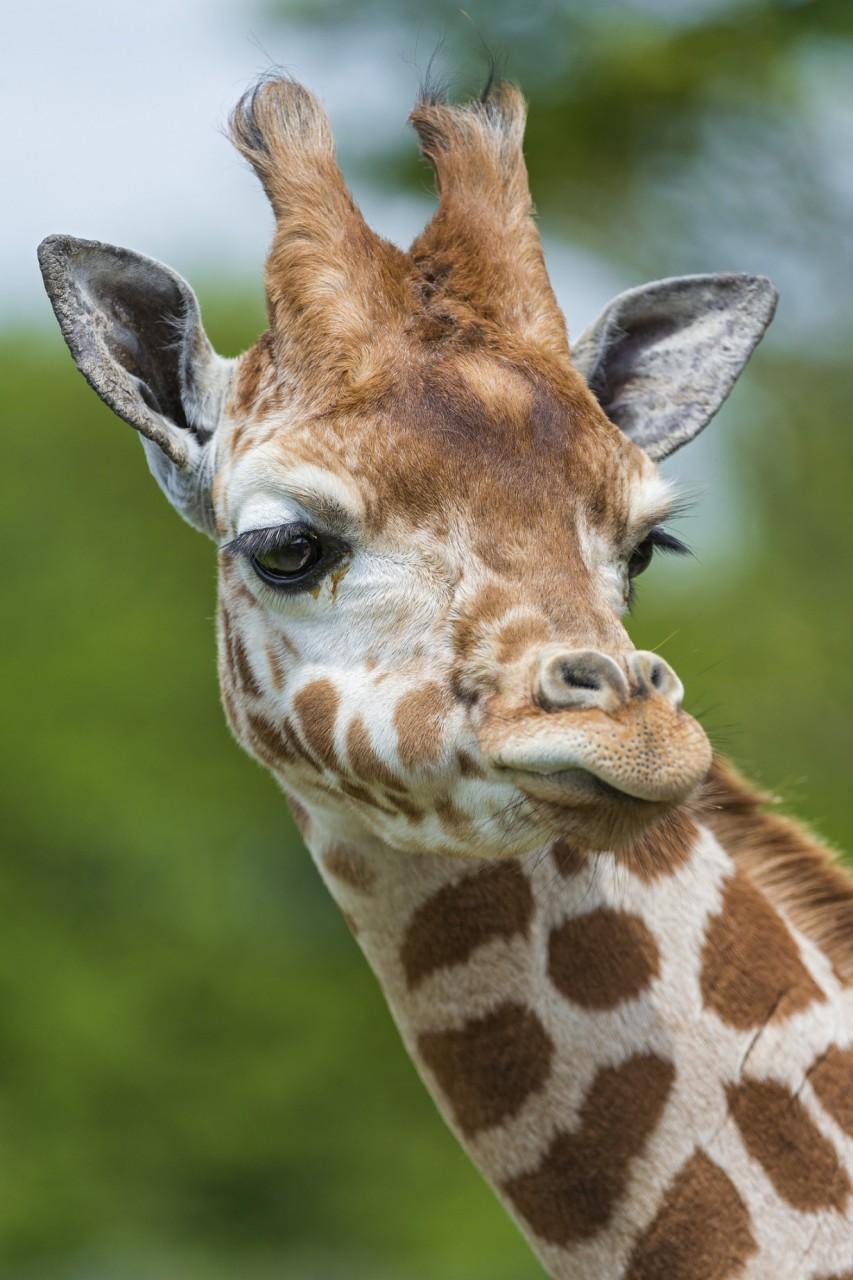 Прикольные картинки животных их фото, открытки