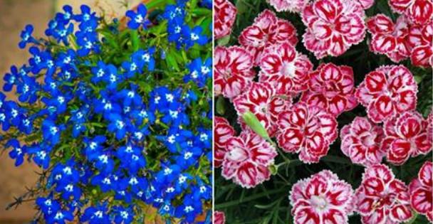 Цветы, которые необходимо се…