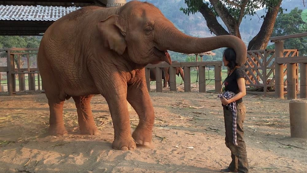 Колыбельная песня для слоних…