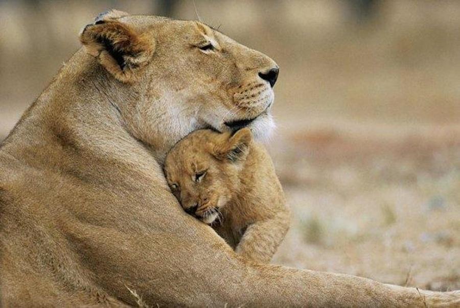 картинки с мамами и детенышами животных поразился, как