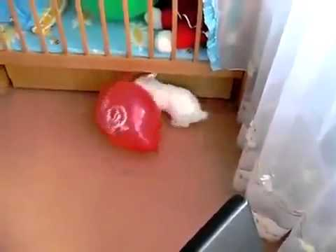 У кролика бомбануло больше, чем у шарика