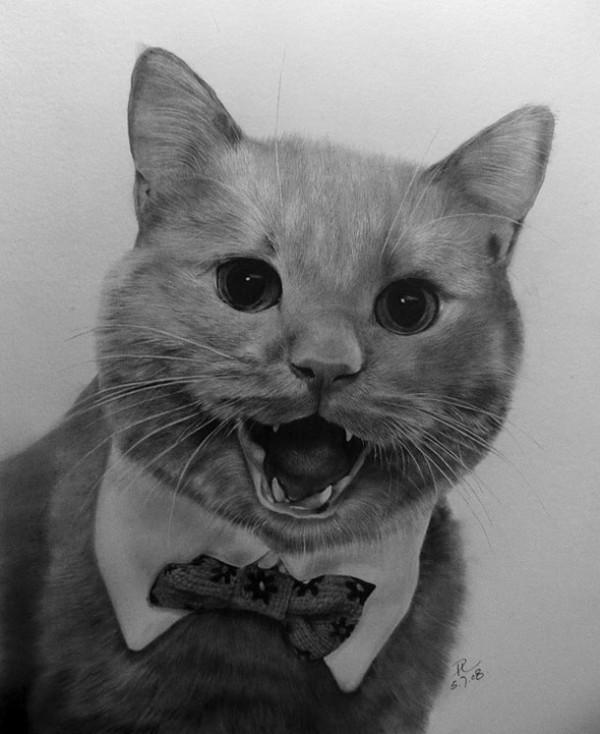 Фотографические рисунки кошек от Paul Lung животные