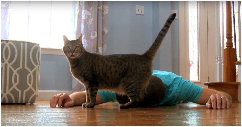 Хозяин притворился мертвым, чтобы проверить реакцию своей кошки