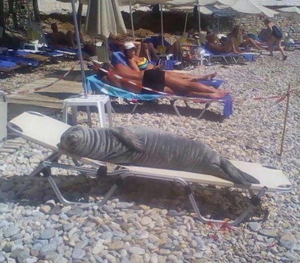 Ее зовут Арджило. и местные жители держат для нее на пляже специальный лежак Вот это ДА, забавно, находки, неожиданности, пляжи, смешно, странные вещи, удивительное рядом