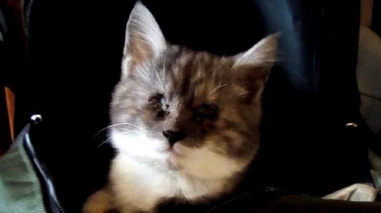 Больной котик сидел на улице. В его глазах была куча гноя и он ничего не видел