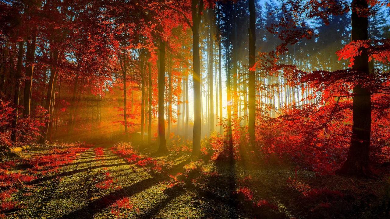 Тест. Выберите лесную тропу …
