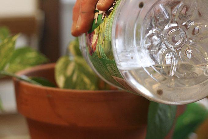 1. Для цветов вода, макароны, советы