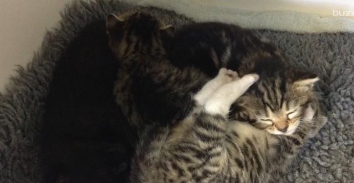 Мама-кошка ворвалась в клинику, куда подбросили ее котят. Поразительно!