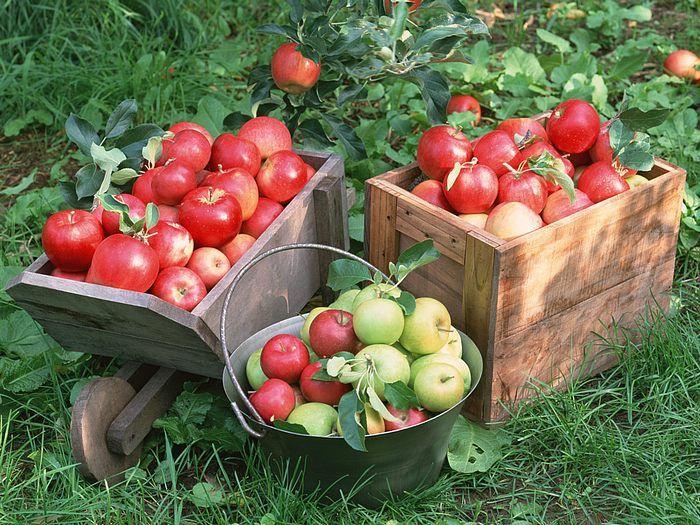 Простые способы облегчить уход за садом