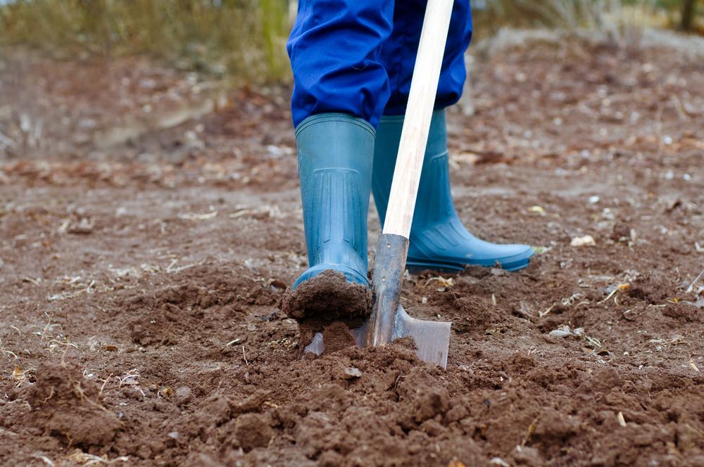 Копать или не копать?