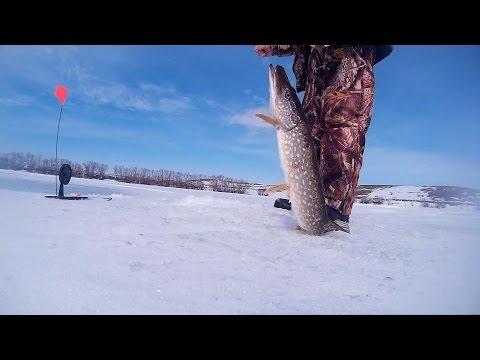Четкая рыбалка на жерлицы. Закрытие сезона! (Самарская область 2016 г)
