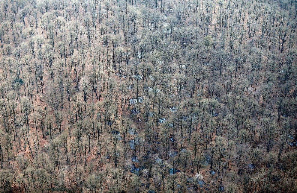 В этом лесу видны с воздуха траншеи и оборонительные сооружения того времени