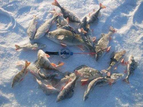 Капелька рыбацкого счастья