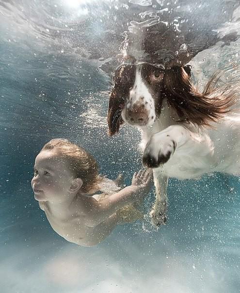 Животные под водой