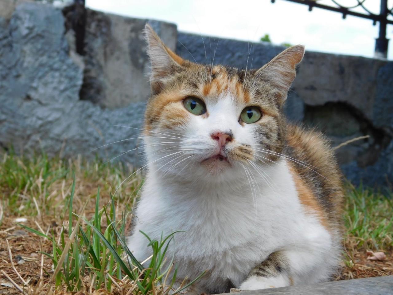 Кошки. Лето-2018