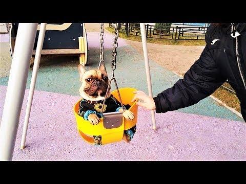 Смешные Собаки Приколы про Собак Funny Dogs 2018 #1 Видео Приколы с Животными 2018