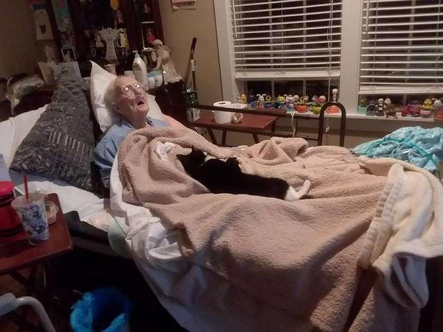 Кошка отказывается уходить от постели умирающей бабушки, которая её вырастила