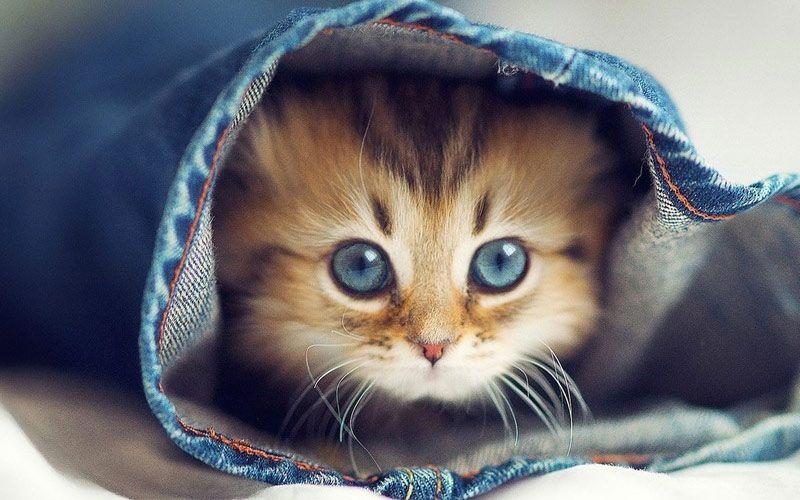 A не завести ли вам кота????