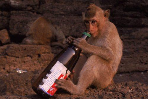 Пьяницы животного мира
