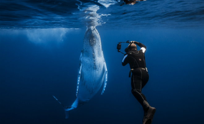 10 самых красивых фото, снятых под водой в этом году