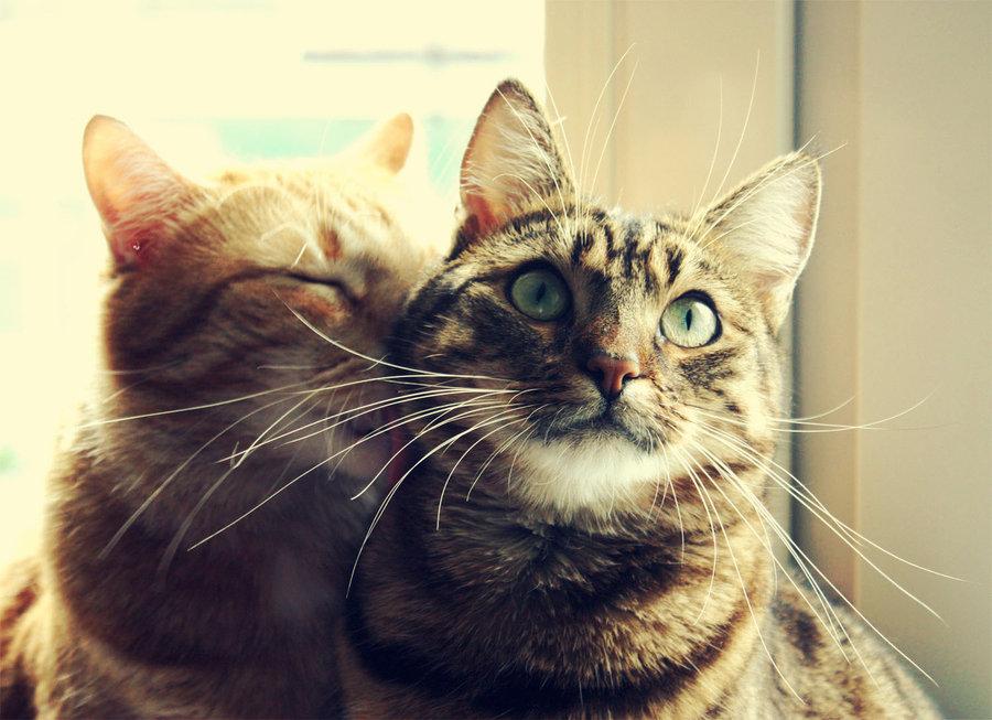 Почему кошка лучше жены