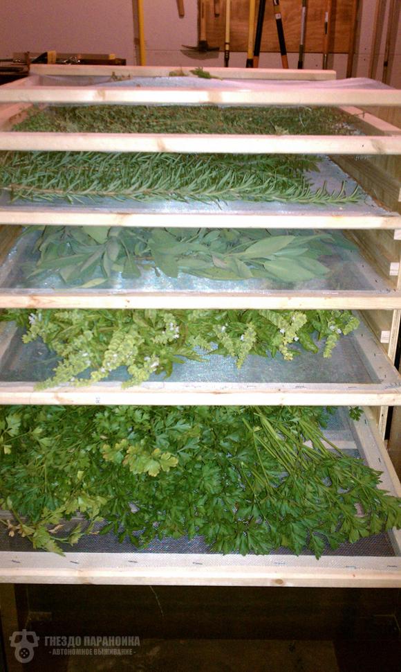 Как сделать сушилку для фруктов и овощей за 11 шагов