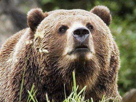 Медведя можно убить хворостиной