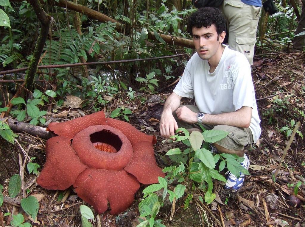 Раффлезия - род удивительных растений, паразитирующих в основном на лианах. интересное, природа, растения, цветы