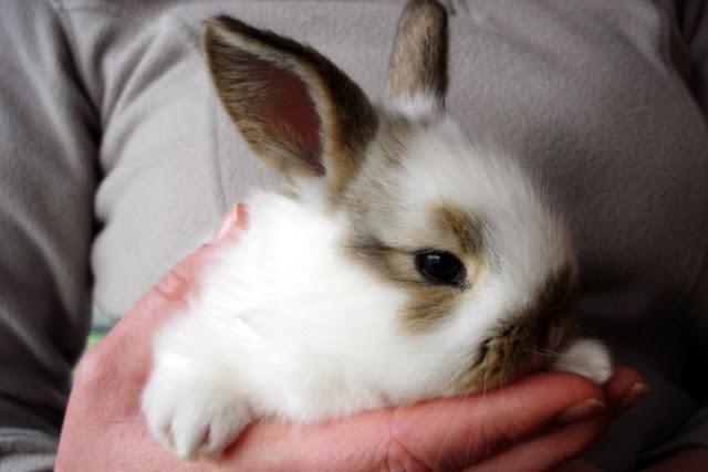 Радиоведущий показательно убил кролика в прямом эфире