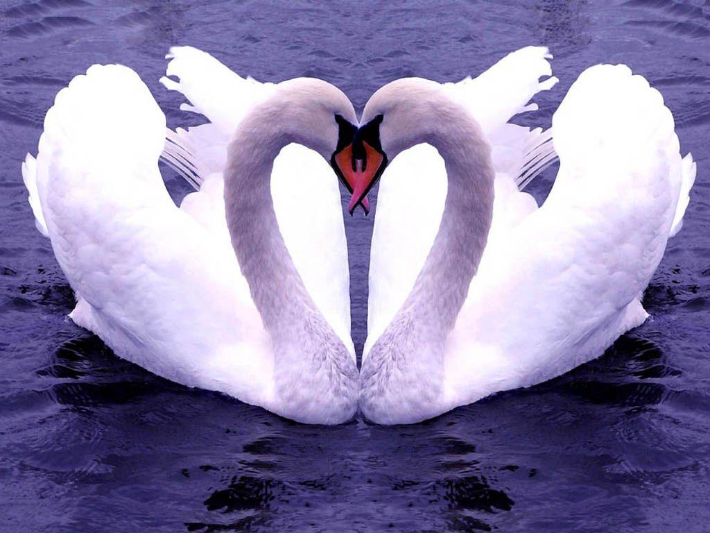 Как, красивые и прикольные картинки про любовь