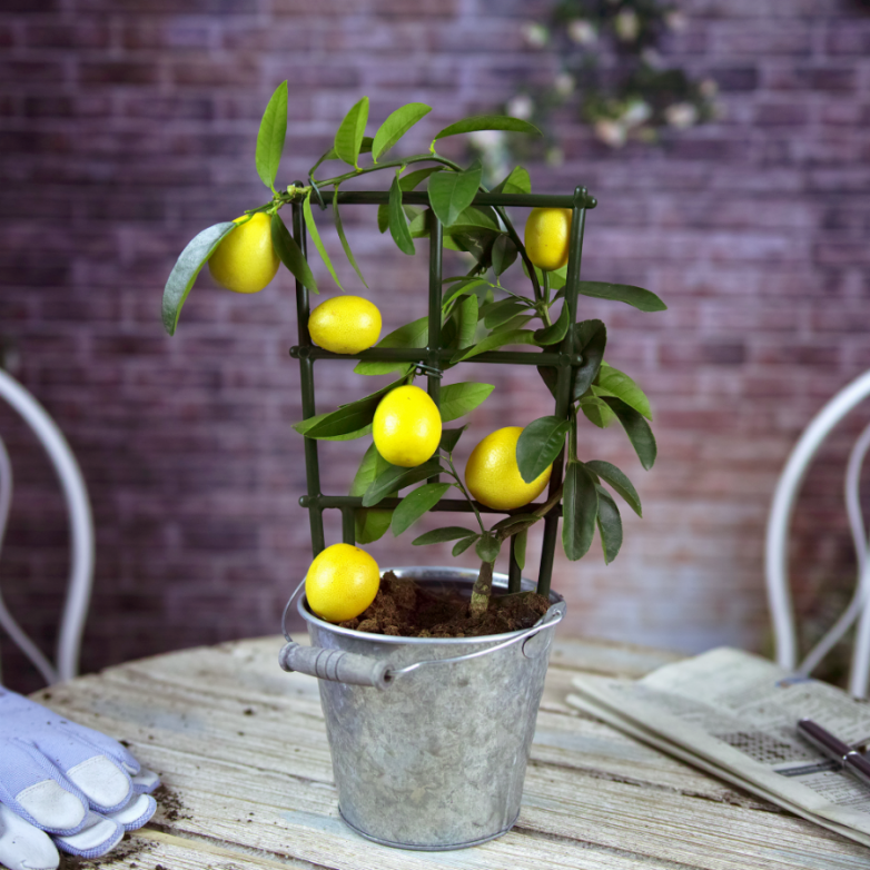Растения, улучшающие самочувствие домашний очаг...