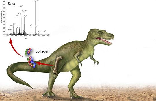 О чем могут рассказать ископаемые белки?