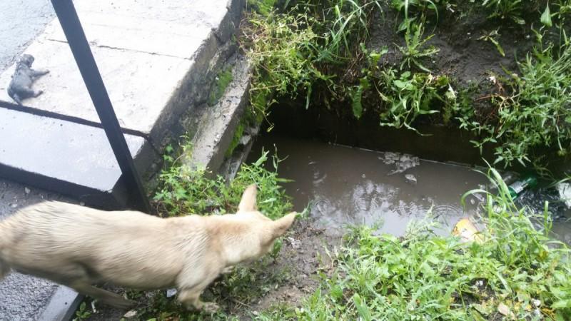 Крошечных щенков затопило до…