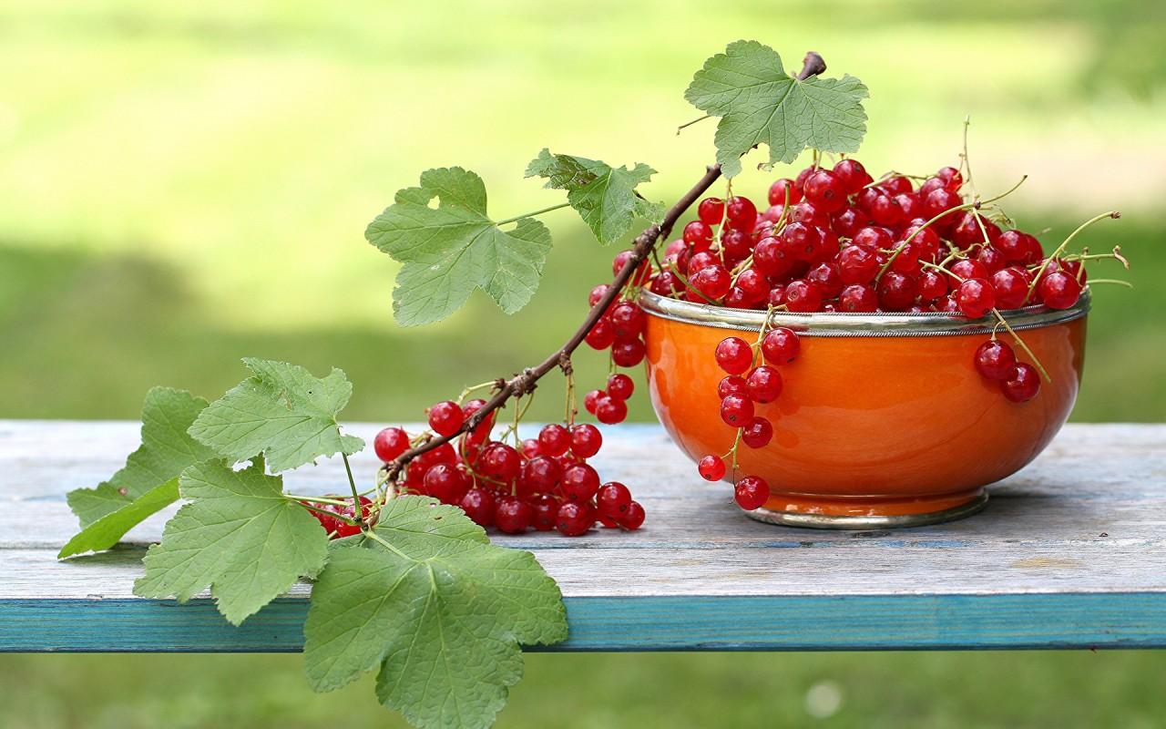 Красная смородина — полезные…