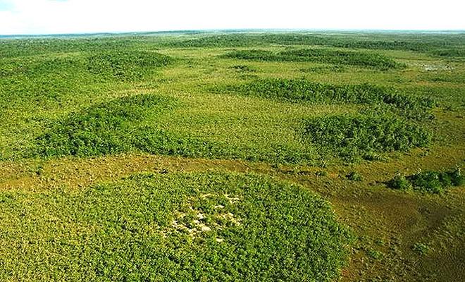 Ученые выяснили, что плавающие острова в Амазонии посажены искусственно 10 тысяч лет назад Культура