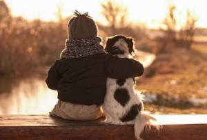 Уклад семьи и собака из приюта