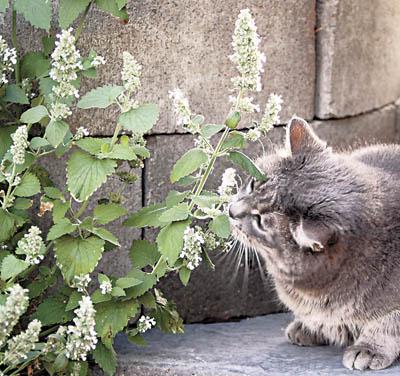 Кошачья радость