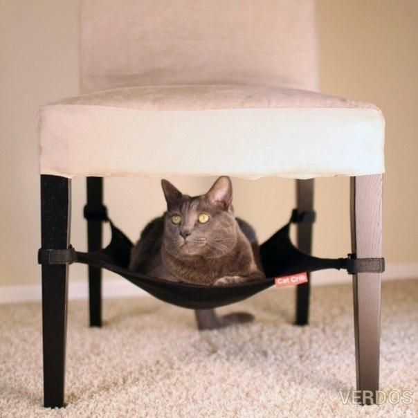 Вещи, которые захочет иметь ваша кошка.
