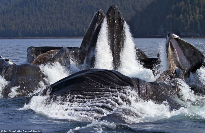 Морские гиганты