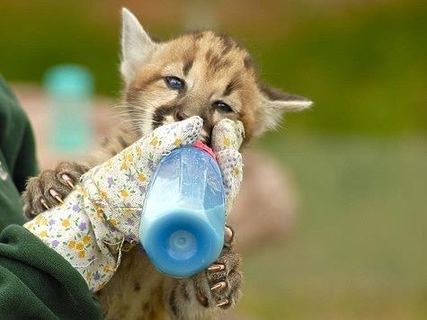 Принят запрет на содержание дома диких животных