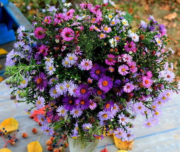 Цветы октября.